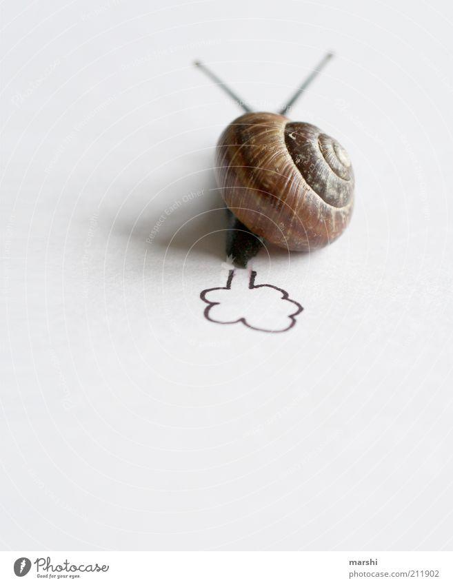 Schneckenpups Tier 1 braun weiß Schneckenhaus klein Fühler Auspuff lustig langsam Geschwindigkeit Geschwindigkeitsrausch Pups Farbfoto Innenaufnahme