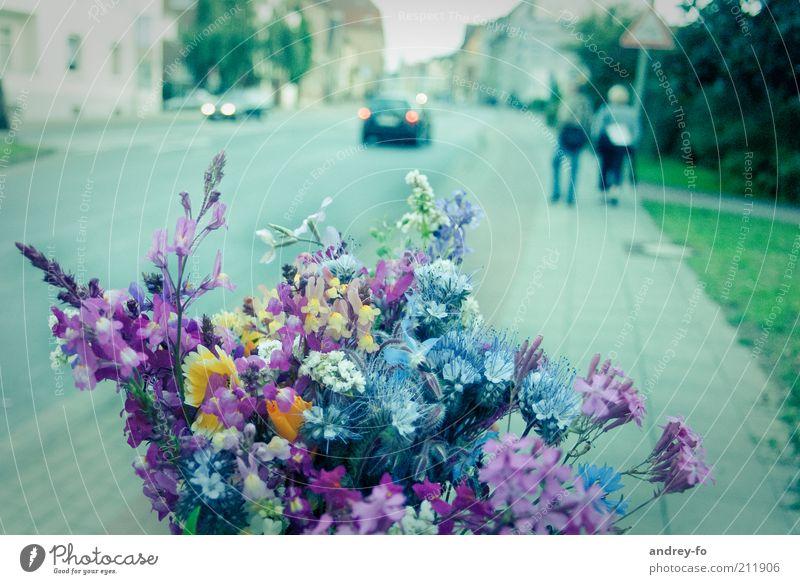 Blumenstrauß Natur Pflanze Frühling Sommer Fußgänger Straße Fahrzeug Duft blau mehrfarbig grün rosa Gefühle Sommerblumen Urbanisierung Blühend Farbfoto