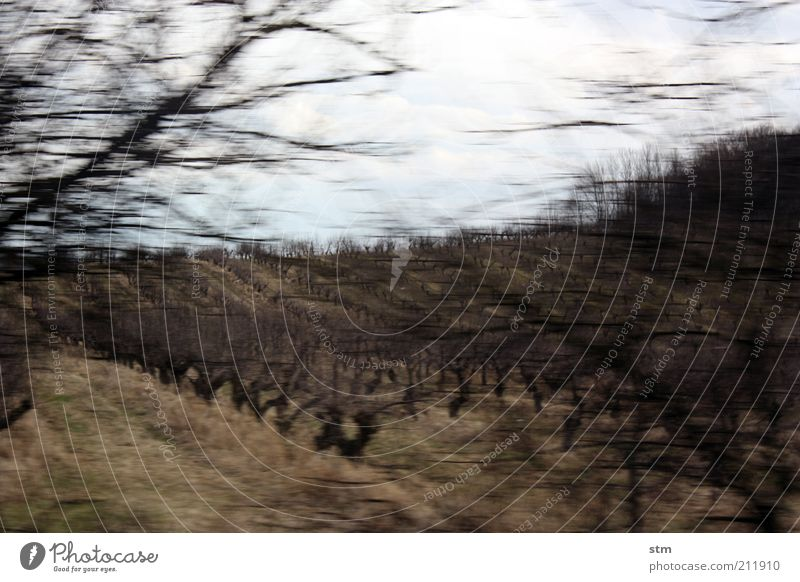 roadmovie 24 Natur Himmel Pflanze Herbst Landschaft Stimmung Umwelt Wein Sträucher Hügel kahl Weinberg laublos Weinbau Obstbaum Obstbau