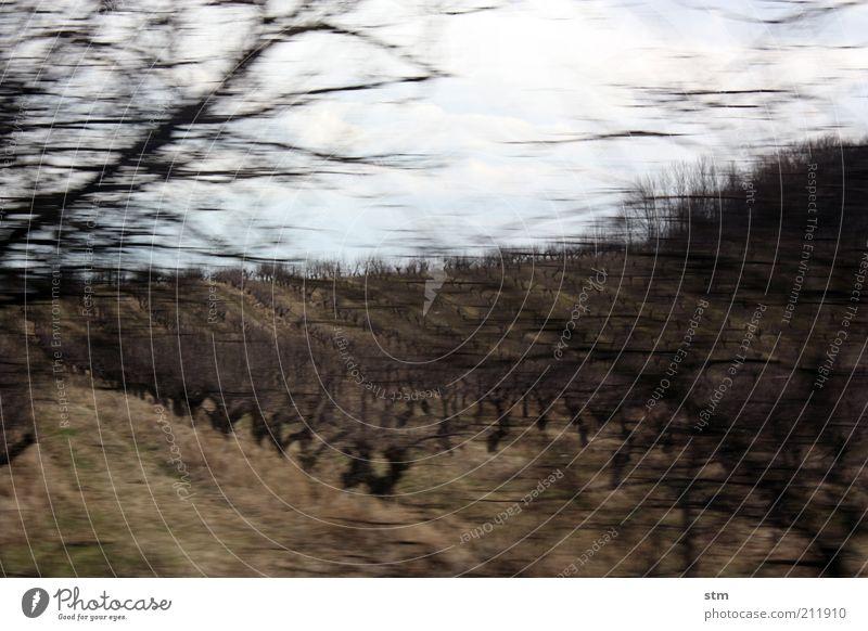 roadmovie 24 Umwelt Natur Landschaft Pflanze Himmel Herbst Sträucher Weinberg Weinbau Obstbaum Hügel Stimmung Gedeckte Farben Außenaufnahme Experiment Unschärfe