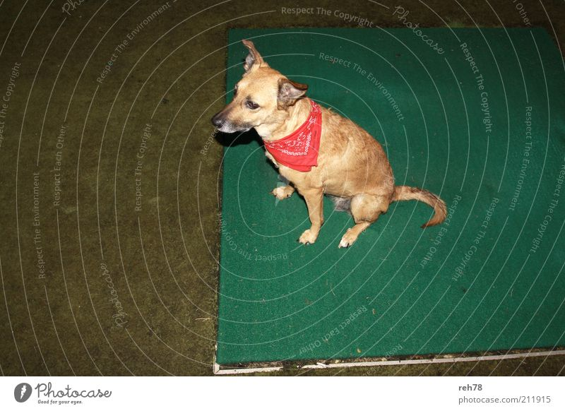 dog at night Tier Gefühle Hund Denken Stimmung blond Erde Tierjunges warten frisch natürlich ästhetisch authentisch außergewöhnlich niedlich beobachten