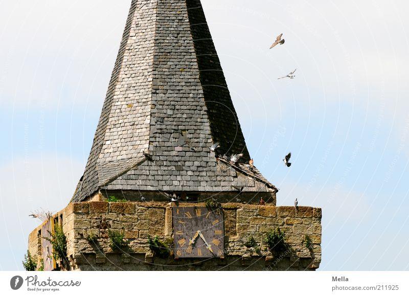 Halb acht Himmel Tier Freiheit Stein Gebäude Zusammensein Vogel Fliege fliegen Zeit frei Fassade sitzen Kirche Tiergruppe Dach