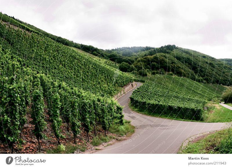 WeinStraßen Kultur Landschaft Sommer Herbst Pflanze Hügel Berge u. Gebirge Weinberg Landwirtschaft Weinbau Abzweigung Mosel (Weinbaugebiet) Fahrradweg Farbfoto