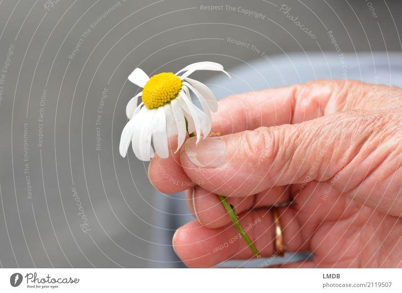 ...den Frühling halten! Glück Gesundheit Seniorenpflege feminin Frau Erwachsene Weiblicher Senior Großmutter Leben Hand 60 und älter Blume Blühend verblüht