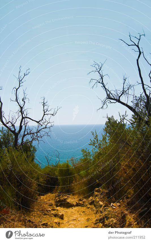 Hinter dem Horizont Natur Landschaft Pflanze Wolkenloser Himmel Sommer Schönes Wetter Sträucher Meer Insel ruhig Einsamkeit Ferne Ferien & Urlaub & Reisen