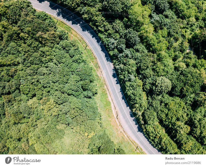 Vogelperspektive der Straße durch Karpaten-Gebirgswald laufend Natur Ferien & Urlaub & Reisen Pflanze Sommer Farbe grün Baum Landschaft Ferne Wald
