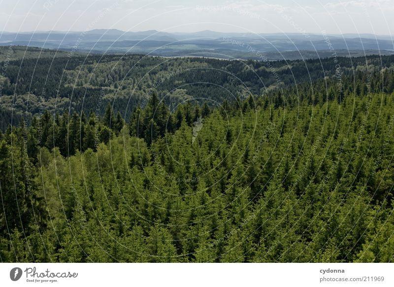 Über allen Wipfeln ist ruh' Natur Baum Ferien & Urlaub & Reisen Einsamkeit ruhig Wald Ferne Umwelt Landschaft Leben Berge u. Gebirge Freiheit Horizont Zeit einzigartig Hügel