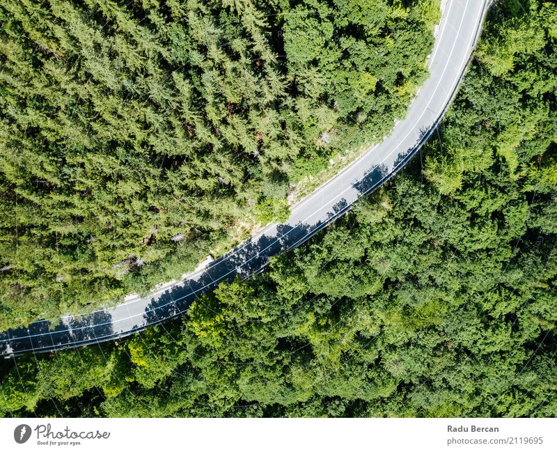 Vogelperspektive der Straße durch Karpaten-Gebirgswald laufend Natur Ferien & Urlaub & Reisen Pflanze Sommer Farbe schön grün Landschaft Baum Ferne Wald