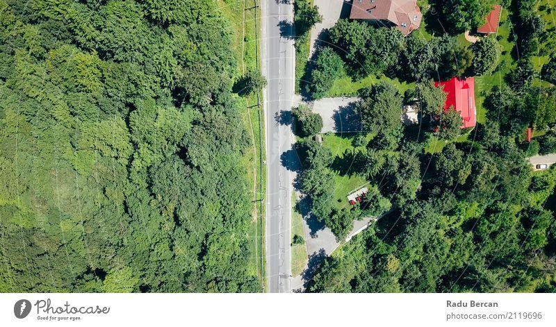 Vogelperspektive der Straße durch Karpaten-Gebirgswald laufend Umwelt Natur Landschaft Erde Sommer Schönes Wetter Baum Gras Wiese Feld Wald Verkehr Verkehrswege