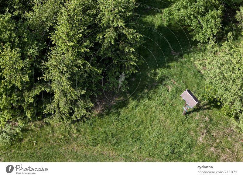 Wegweiser Natur Baum grün Ferien & Urlaub & Reisen ruhig Einsamkeit Wald Leben Erholung Wiese Freiheit Wege & Pfade Landschaft Umwelt Ausflug Tourismus