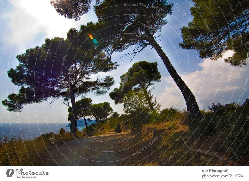 Mitten im Irgendwo Natur Landschaft Pflanze Himmel Wolken Horizont Sonne Sonnenlicht Sommer Wetter Schönes Wetter Baum Gras Sträucher Ferien & Urlaub & Reisen