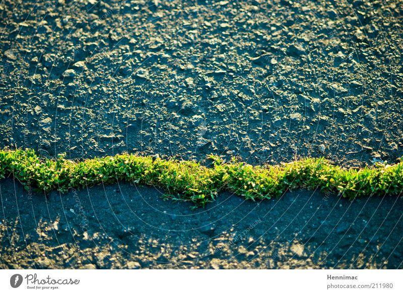 Green Mile. Natur Frühling Sommer Gras Moos Grünpflanze Straße Wege & Pfade Stein Beton ästhetisch außergewöhnlich dünn grau grün Willensstärke Ausdauer