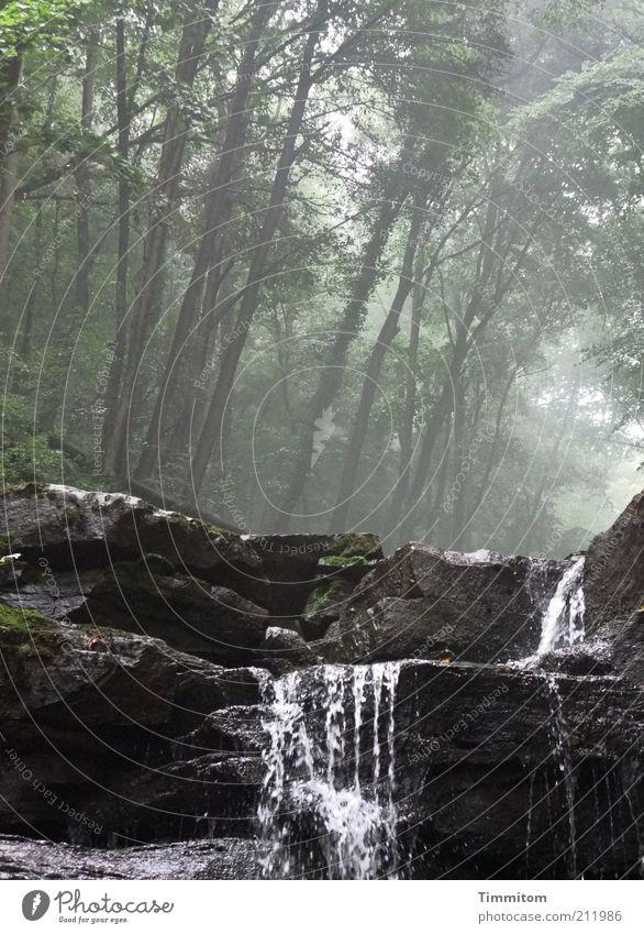 Schlucht Ausflug Sommer Umwelt Natur Landschaft Urelemente Luft Wasser Wetter Wald Felsen Wasserfall atmen beobachten Bewegung gehen hören Blick nass natürlich