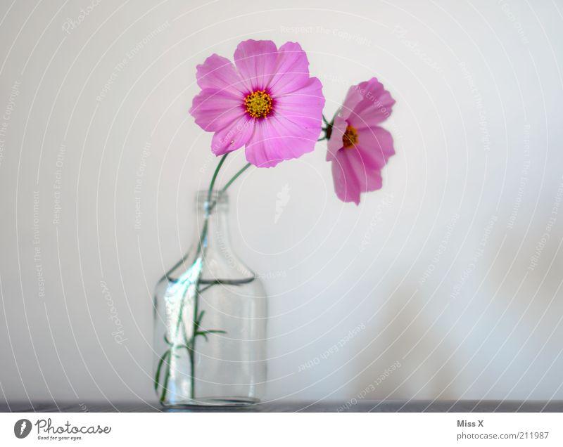 Blümchen für den Schatz Blume Blüte Stimmung rosa Glas rein Blühend Duft positiv Vase Blütenblatt Schmuckkörbchen
