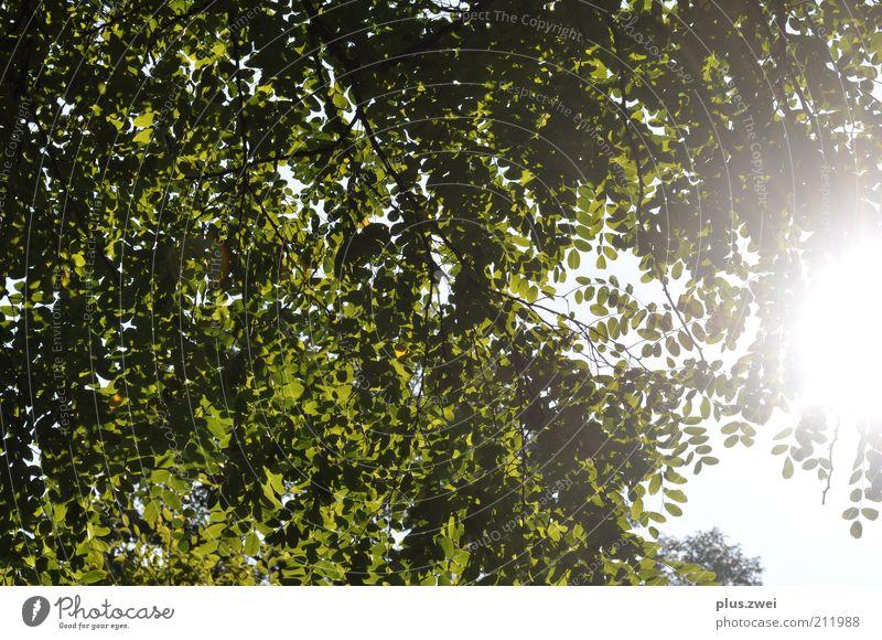 Sommertag Natur Himmel Baum Sonne Pflanze Freude ruhig Blatt Glück Zufriedenheit Umwelt Schönes Wetter Frühlingsgefühle Blätterdach