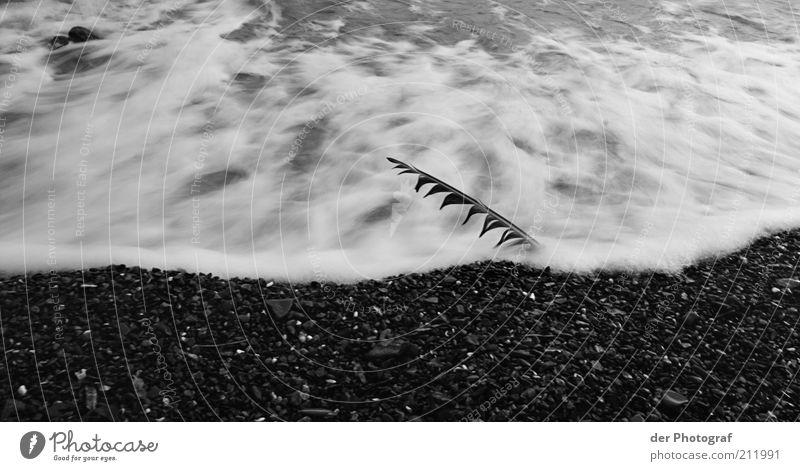 Washed away Natur Wasser Strand Einsamkeit Tod Küste Wellen Trauer Feder Sehnsucht Schmerz Gischt Schwarzweißfoto
