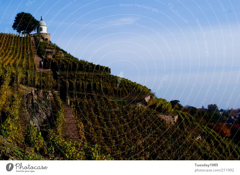 Der hang zum Göttertropfen Himmel grün blau Frühling Wege & Pfade Gebäude Landschaft Felsen Wein natürlich außergewöhnlich Hügel Gipfel historisch
