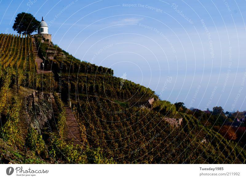 Der hang zum Göttertropfen Landschaft Himmel Frühling Schönes Wetter Grünpflanze Nutzpflanze Felsen Gipfel außergewöhnlich historisch nachhaltig natürlich blau