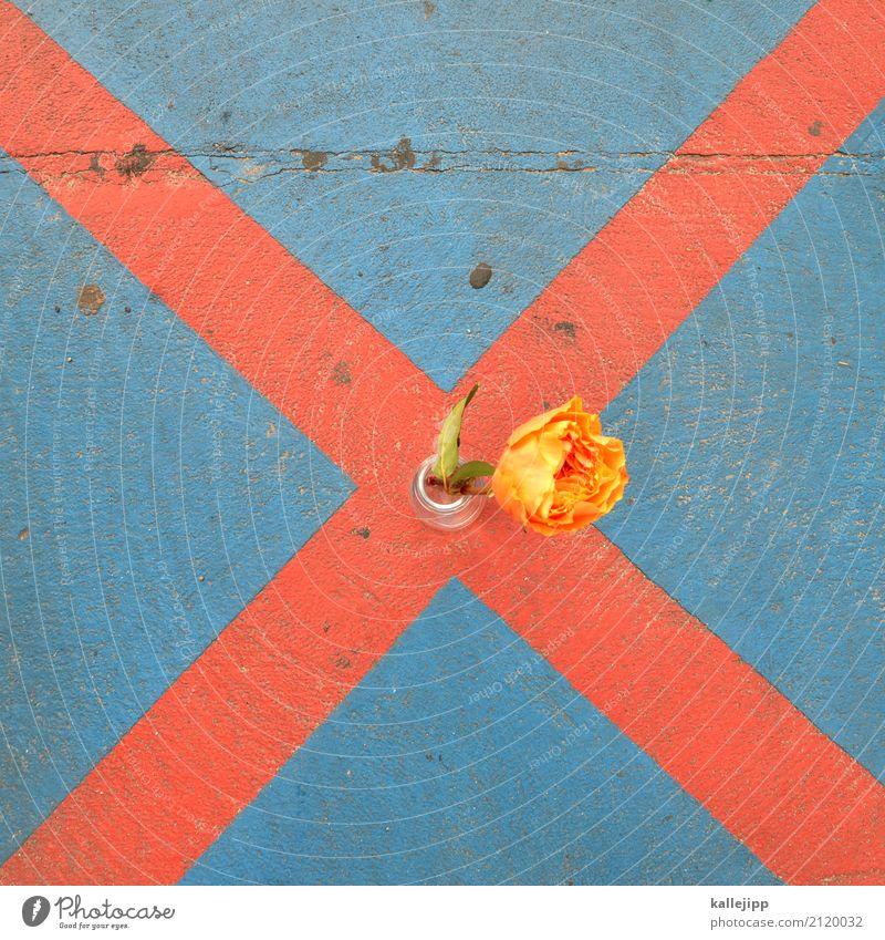 flowerx Blume Zeichen Verkehrszeichen blau mehrfarbig gelb orange rot Parkverbot Vase Zielkreuz planen nachhaltig achtsam Farbfoto Außenaufnahme Tag