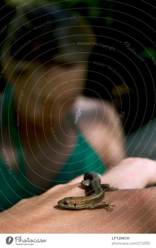 EINES-DECHSE Junge Frau Jugendliche Erwachsene Hand 1 Mensch 18-30 Jahre Tier Wildtier krabbeln Tierliebe gefährlich Schüchternheit klein Textfreiraum oben