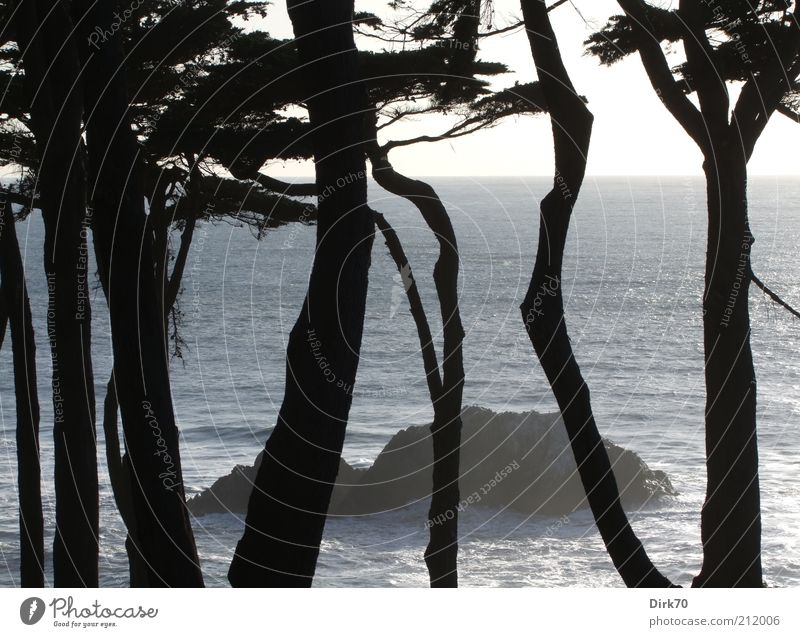 Fels in der Brandung Wasser schön Baum Meer Sommer Wald kalt Landschaft Küste Wellen Felsen Insel bedrohlich wild Amerika Baumstamm