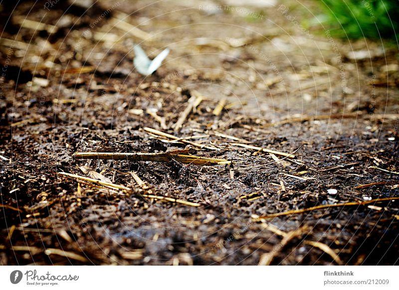 Schmetterling auf dem Boden Natur Tier Erholung Landschaft braun Umwelt Erde sitzen beobachten Wildtier Schönes Wetter Waldboden bodennah