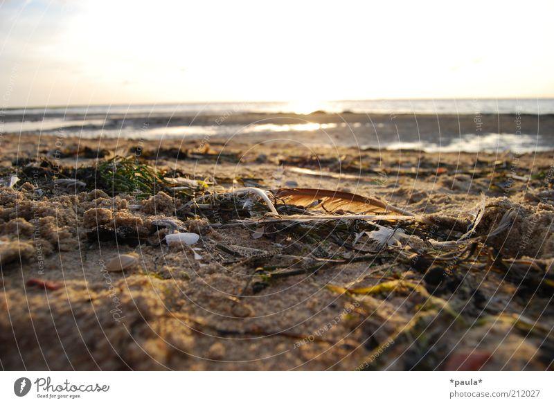 Kleine Strandschätze Natur Landschaft Erde Sand Wasser Himmel Horizont Sonne Sonnenaufgang Sonnenuntergang Sommer Schönes Wetter Feder Algen leuchten träumen
