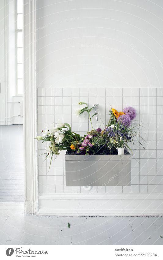 Becken-Blumenkasten weiß Architektur Lifestyle Blüte Innenarchitektur natürlich Gebäude Kunst Deutschland Arbeit & Erwerbstätigkeit Wohnung Häusliches Leben