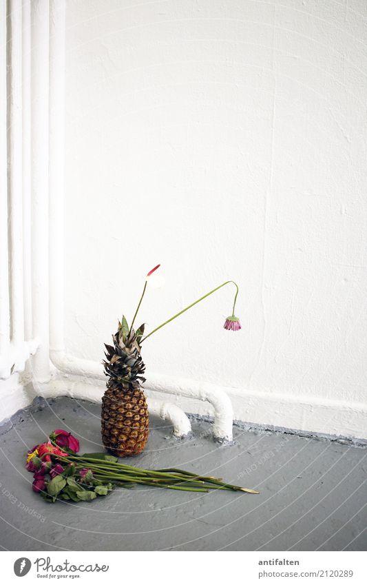 Ananas für den Künstler weiß Blume Blatt Freude Essen Lifestyle Blüte natürlich Kunst grau Häusliches Leben Frucht Zufriedenheit Raum Ernährung ästhetisch