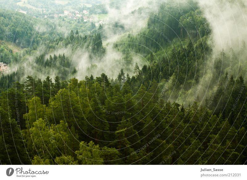 Nebelschwaden Umwelt Natur Landschaft Pflanze Wolken Klima Wetter Regen Wald Urwald Hügel Felsen Berge u. Gebirge dunkel mystisch Riesengebirge Nebelbank grün
