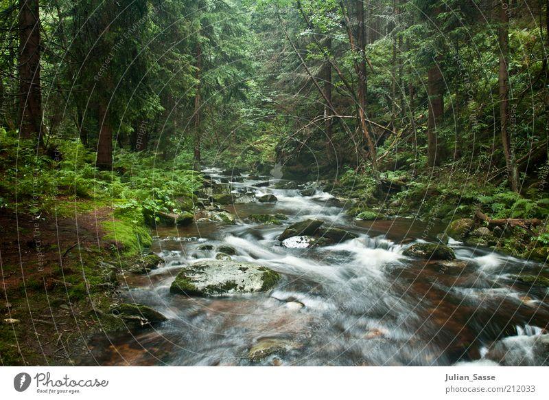 Bachlauf 2 Umwelt Natur Landschaft Pflanze Urelemente Erde Wasser Wald Urwald Fluss nass Langzeitbelichtung grün Außenaufnahme Waldboden Menschenleer Felsen