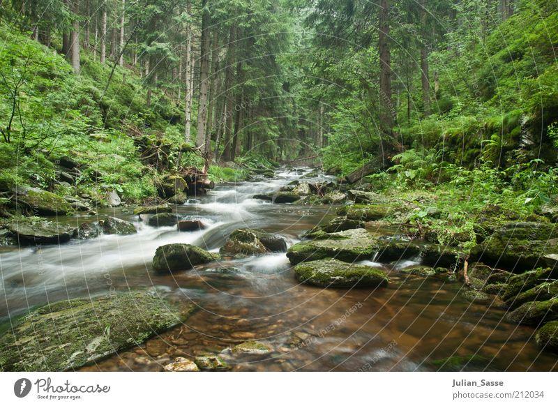 Bachlauf 3 Umwelt Natur Landschaft Pflanze Urelemente Erde Wasser Wald See Fluss nass Riesengebirge Langzeitbelichtung Außenaufnahme Stein Felsen Urwald