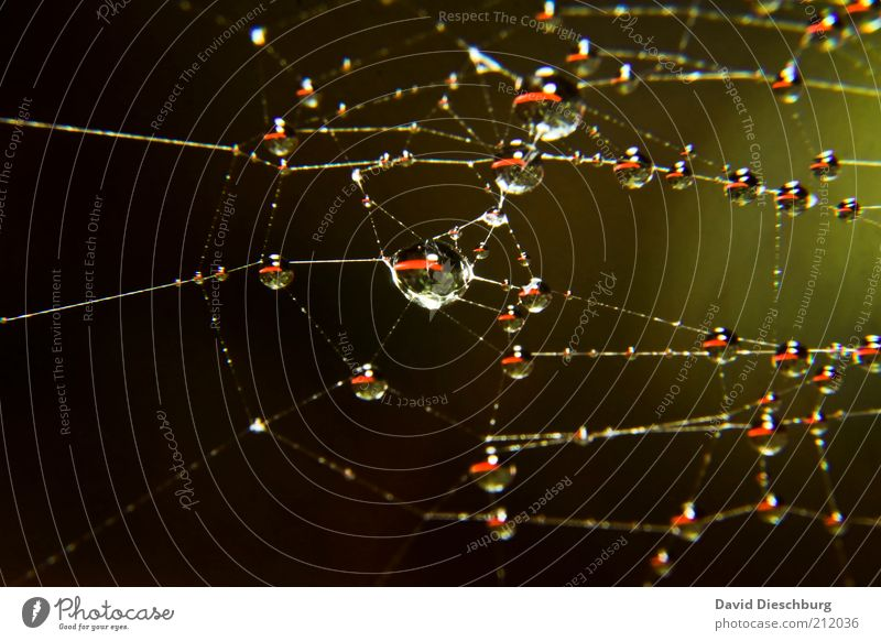 Nasse Zeit Natur grün Wasser schwarz glänzend Wassertropfen nass rund Netzwerk Verbindung Kugel Tau silber filigran Lichtpunkt Spinnennetz