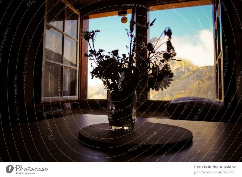 100-grüße von der alm... Blume Sommer Ferien & Urlaub & Reisen Wolken ruhig Erholung Fenster Berge u. Gebirge Zufriedenheit Glas Tisch Schweiz Alpen Gipfel Duft genießen