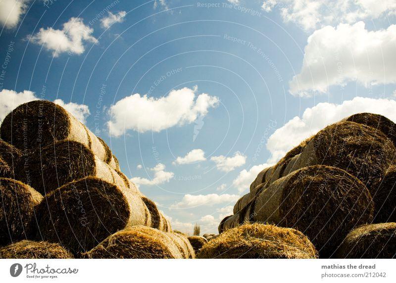 V Umwelt Natur Landschaft Luft Himmel Wolken Sommer Schönes Wetter Pflanze Gras Nutzpflanze rund Strohballen Futter Haufen Stapel Pyramide v Symmetrie ruhig