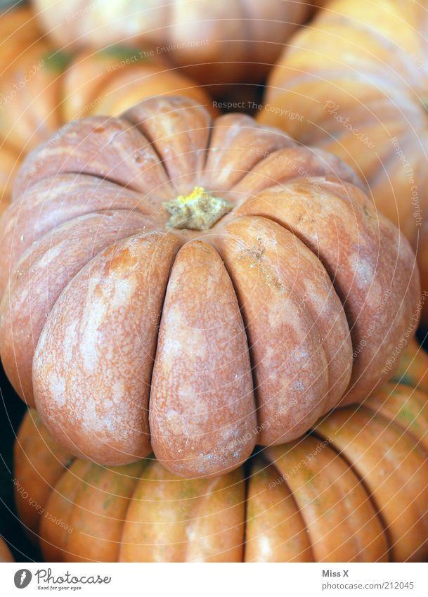 Kürbis Lebensmittel Gemüse Ernährung Bioprodukte Vegetarische Ernährung groß rund Wochenmarkt Marktstand Gemüsemarkt orange Farbfoto Gedeckte Farben Nahaufnahme