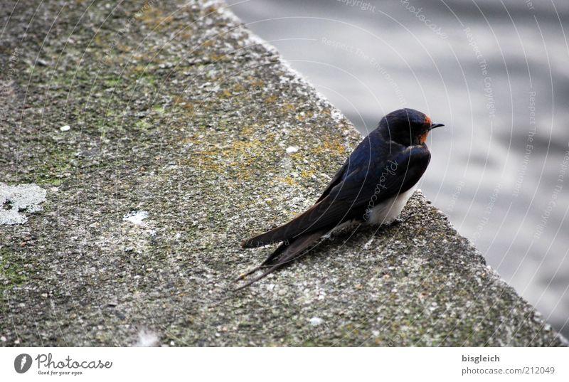 Abflug Tier grau Vogel klein Beton Wildtier niedlich startbereit