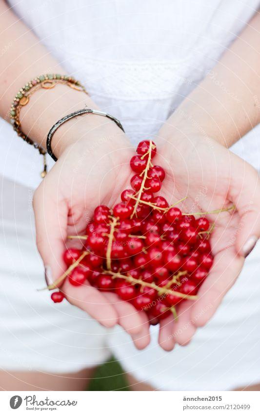 Johannisbeeren II Beeren Gesunde Ernährung Speise Essen Foodfotografie Lebensmittel Sommer ansammeln Frucht Hand festhalten Frau weiß rot grün Frühling