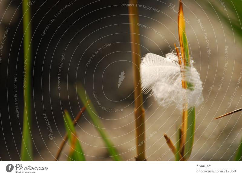 Was bleibt zurück? Natur schön weiß grün ruhig Gras braun klein authentisch nah weich Feder einzigartig natürlich leicht Halm