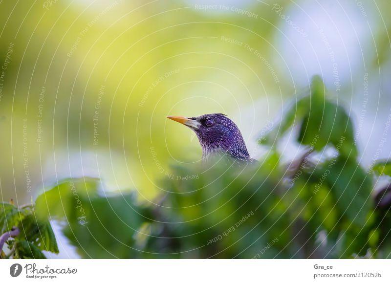 Wer bin ich Natur Pflanze Tier Sonne Frühling Sommer Schönes Wetter Wärme Baum Blatt Garten Park Wiese Feld Wald Wildtier Vogel 1 beobachten genießen Blick