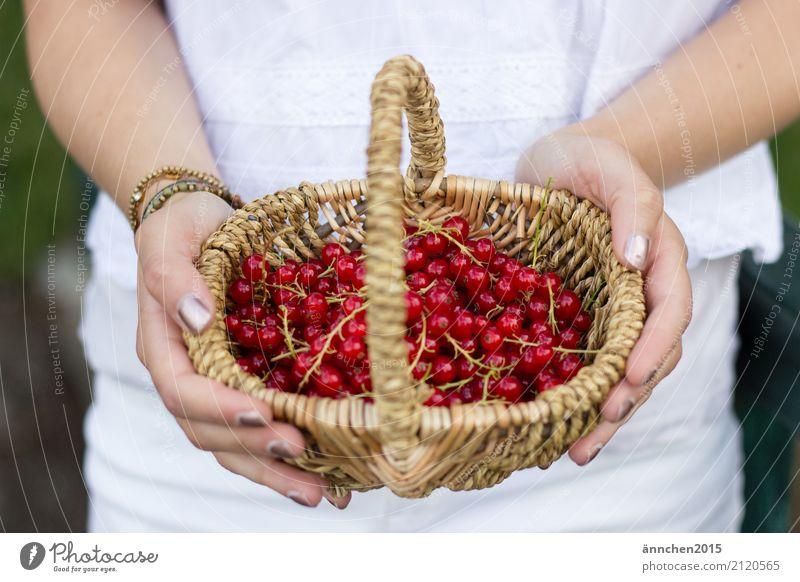 Johannisbeerenernte ernten Korb geflochten Henkel Hand Frau Finger Hände Nagellack weiß rot braun Stengel Obst Frucht Beere Marmelade selbermachen Sommer Freude