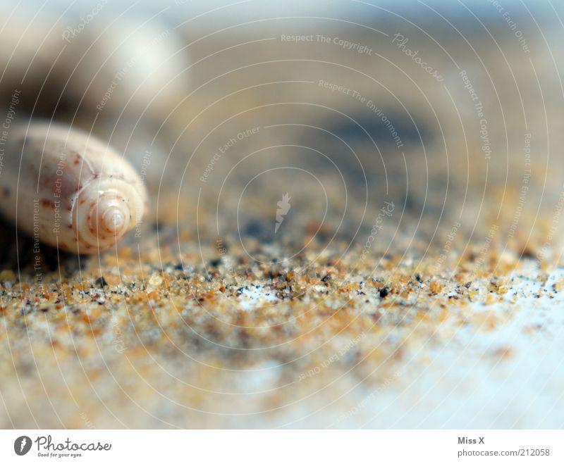 Muschelstrand Ferien & Urlaub & Reisen Sommer Sommerurlaub Strand Küste Tier Schnecke Sand Sandstrand Muschelschale Muschelsand Farbfoto Gedeckte Farben