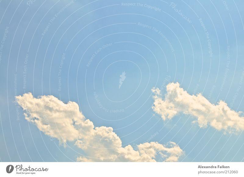 Wolken Umwelt Luft Himmel Sommer Klima Wetter ästhetisch Ferne frei Unendlichkeit schön blau Freiheit Ferien & Urlaub & Reisen luftig fluffig Farbfoto