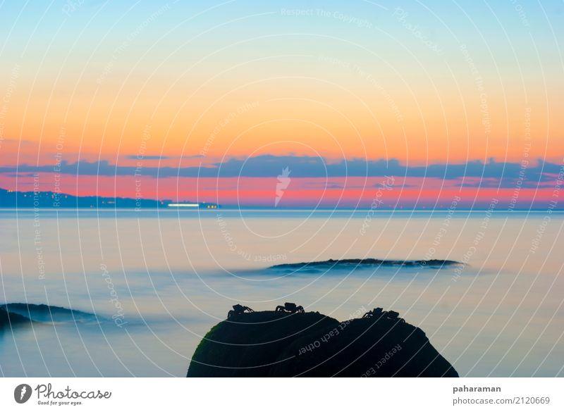 Krabben auf einem Felsen am Meer Natur Tier Wasser Himmel Wolken Sonnenaufgang Sonnenuntergang Sommer Nebel Schwarzes Meer Wildtier Tiergruppe rosa