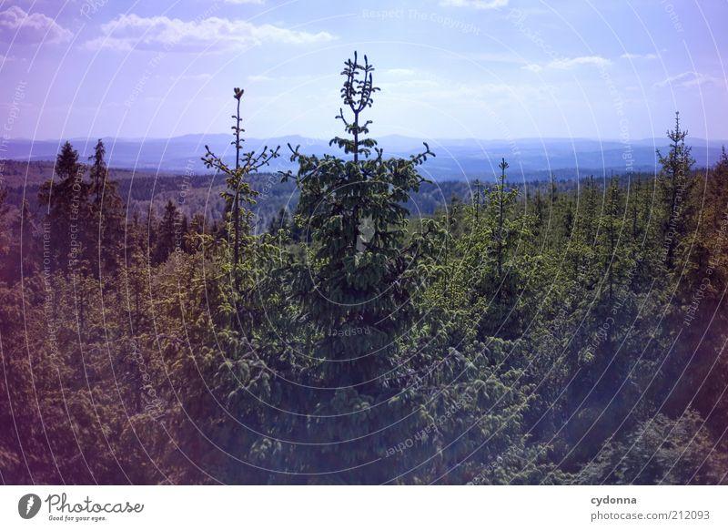 Weitsicht Natur grün Baum Ferien & Urlaub & Reisen ruhig Einsamkeit Ferne Wald Erholung Leben Freiheit Berge u. Gebirge Landschaft Umwelt träumen Zeit