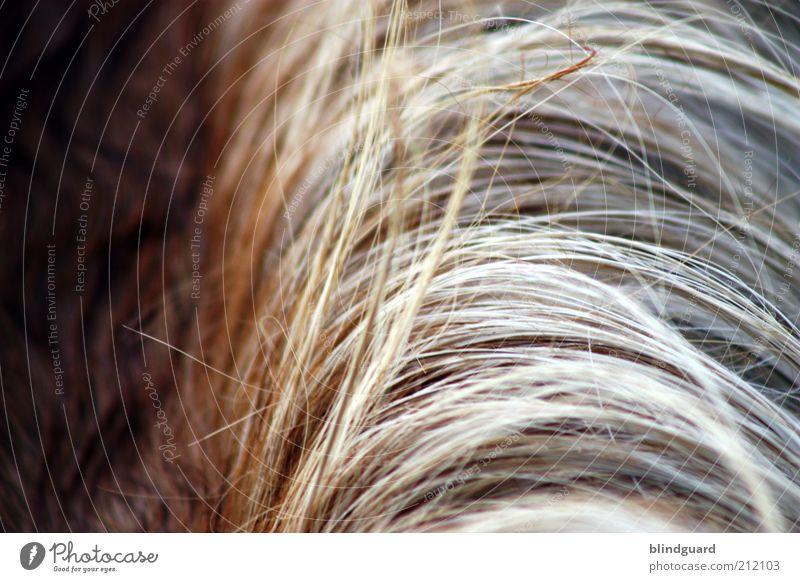 Haarscharf Haare & Frisuren brünett blond langhaarig Scheitel Pony Tier Nutztier Pferd 1 braun grau weiß Mähne Schatten Farbfoto Detailaufnahme Menschenleer Tag