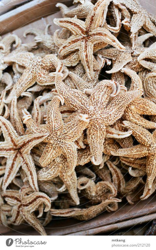braun Lebensmittel natürlich exotisch Zutaten essbar Meeresfrüchte organisch Fischmarkt Seestern Asiatische Küche
