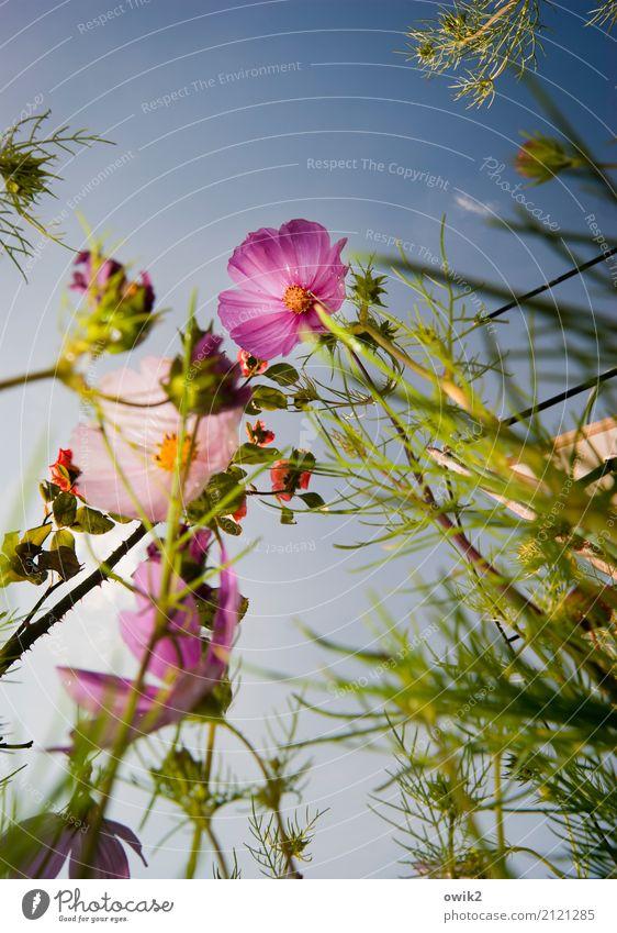 Wildwuchs Natur Pflanze blau grün Landschaft Wolken Umwelt gelb Blüte Bewegung natürlich rosa Zusammensein wild Wachstum Idylle