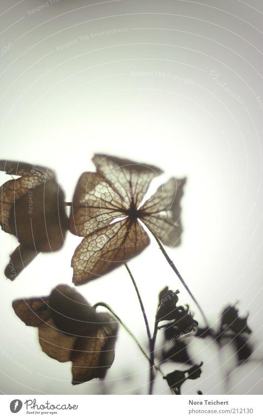 mikroskopisch Natur Blume Pflanze Sommer Blatt Herbst Gefühle Blüte grau träumen Traurigkeit Stimmung Umwelt ästhetisch Sträucher nah