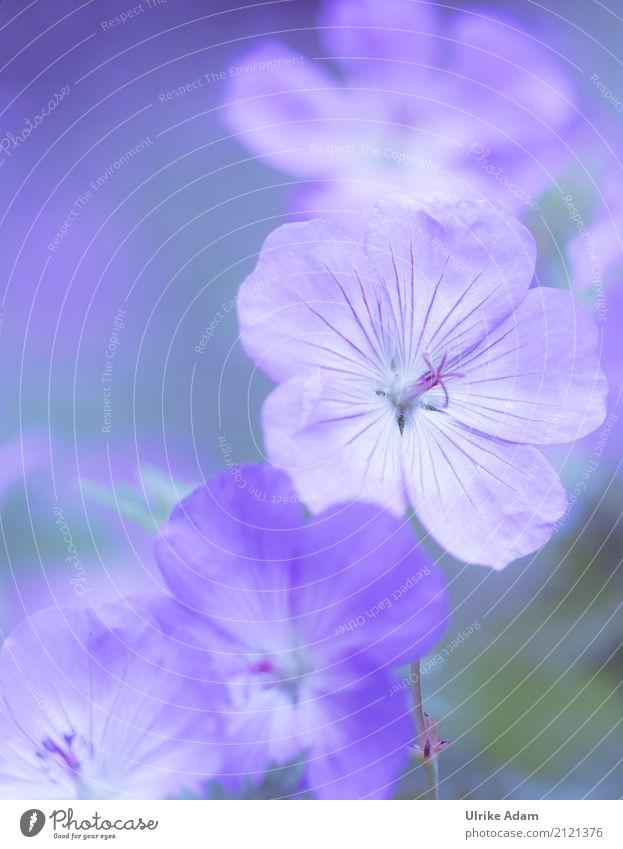 Blauer Storchschnabel (Geranium) Natur Pflanze blau Sommer Blume Herbst Blüte Frühling Innenarchitektur Garten Design Park Dekoration & Verzierung elegant
